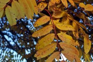 rowen leaf Edinburgh in November!