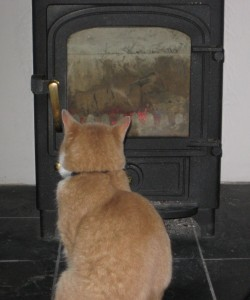 Our cat loves the wood-burner!