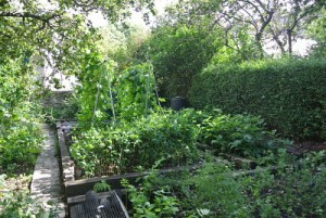 Vegetable patch 2013