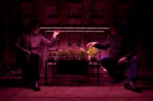 farming-underground-550x366