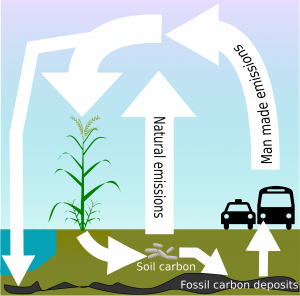 carbon cycle infographic